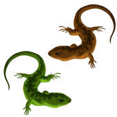 Green and brown lizards on a white background