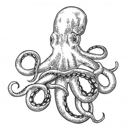 Photo pour Poulpe. Gravure vectorielle en noir sur illustrations vintage. Isolé sur fond blanc . - image libre de droit