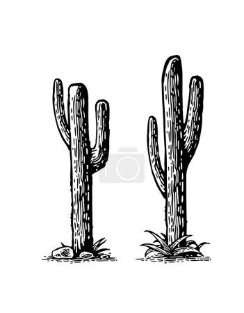 Cactus. Vector hand drawn vintage engraving