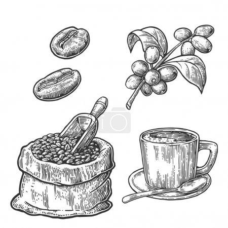 Illustration pour Sac avec grains de café avec cuillère en bois et haricots, tasse, branche avec feuille et baie. Style esquisse dessiné à la main. Illustration de gravure vectorielle vintage pour étiquette, web. Isolé sur fond blanc . - image libre de droit