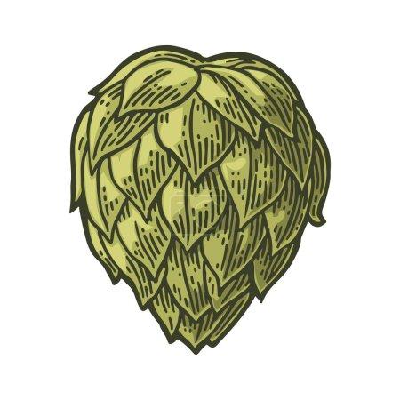 Hop herb plant wih leaf. Vector vintage engraved illustration.