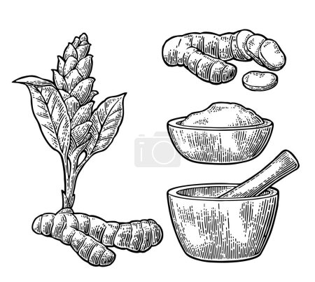 Illustration for Turmeric root, powder and flower with pestle and mortar. Hand drawn vector vintage engraved illustration. Isolated on white background. - Royalty Free Image