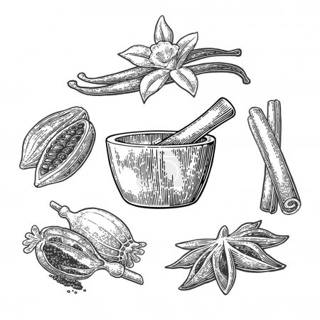 Illustration for Set of Spices, Mortar and Pestle. Anise star, cinnamon stick, fruits of cocoa beans, vanilla stick and flower, poppy heads and seeds. Isolated on white background. Vector black vintage engraving illustration. - Royalty Free Image
