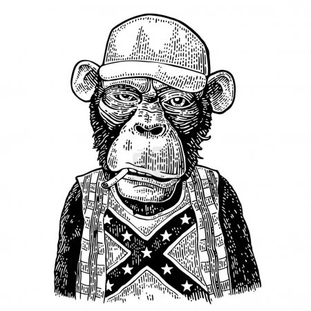 Illustration for Monkey redneck smokes cigarette in trucker cap, checkered shirt, t-shirt with the flag of the Confederate. Vintage black engraving illustration for poster. Isolated on white background - Royalty Free Image