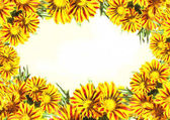 Beautiful gazania, sunflower FRAME for background