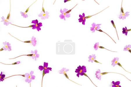 Frame made  of  purple flowers
