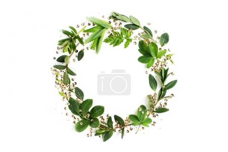 Photo for Beautiful round frame of green leaves and plants over white background - Royalty Free Image