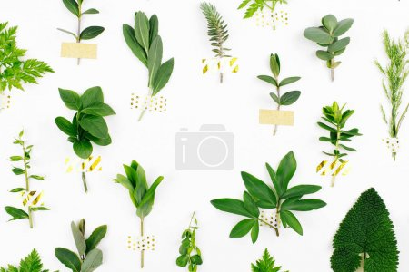 Stylish Botanical background. Varied forest grass and leaves with gold washi tape on a white background. Green Pattern.