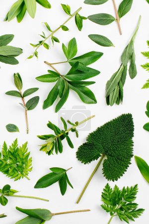 Styled Green leaves frame. Varied forest grass and leaves on a white background.