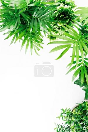Tropical leaves and plants isolated on white background