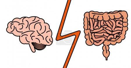 gut versus brain concept