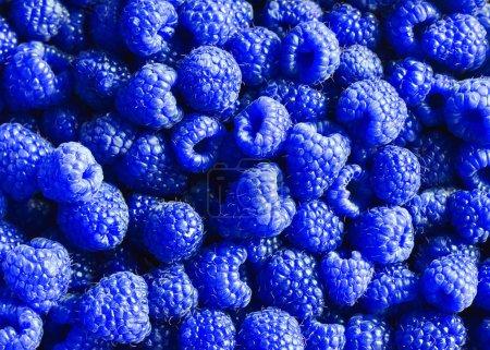 helle köstliche natürliche Hintergrund von vielen reifen ungewöhnlichen blau fr