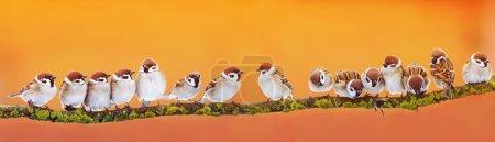 Panorama-Banner von vielen lustigen kleinen Vögeln Spatzen auf einem br