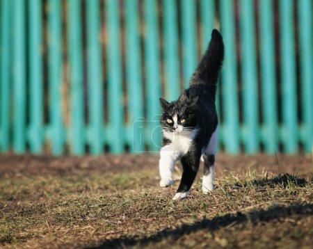 young spotted beautiful cat flees quickly on Sunny spring road i