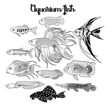 Illustration pour Poissons d'aquarium graphiques dessinés dans le style line art. Sous des paysages aquatiques isolés sur le fond blanc. Coloriage conception de page de livre pour adultes et enfants . - image libre de droit