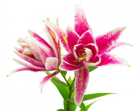 Beautiful bouquet of pink lily flowers