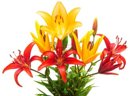 Beautiful bouquet of lily flowers