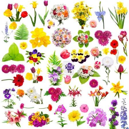 Photo pour Ensemble de fleurs avec fougère, roses, camomilles, chrysanthème, iris, gerbera, lavatera, lis, phlox, culottes et autres isolés sur fond blanc. Été, flore, printemps. Des plantes. Assorti. Couché plat, vue du dessus - image libre de droit