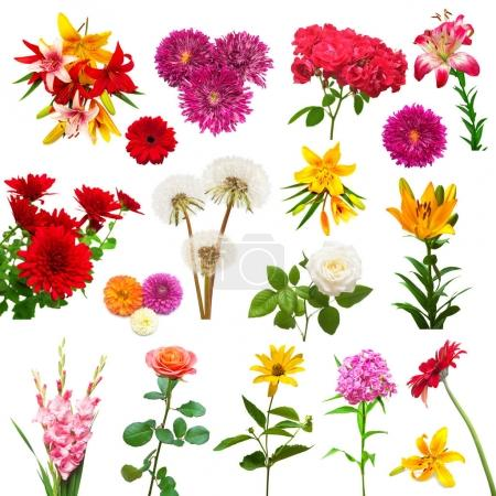 Collection of beautiful colorful flowers dahlias, gladiolus, dandelions, daisies, roses, lilies and other isolated on white background. Flat lay, top view