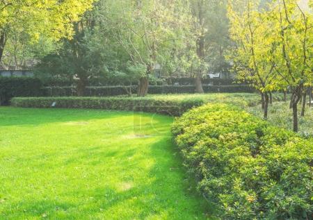 Photo pour Printemps / été paysage de parc de la ville, fond naturel . - image libre de droit