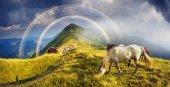 Koně na vrchol hory