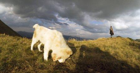 Shepherd and faithful shaggy dog