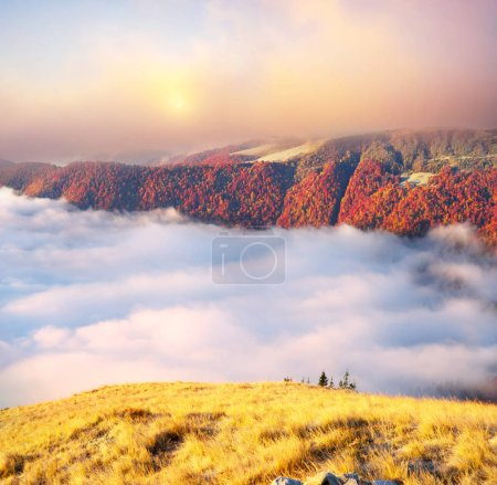 Golden autumn in the Carpathians