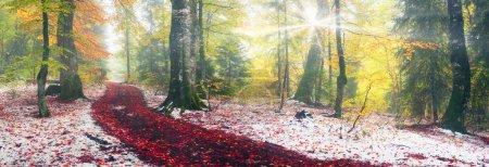 Autumn in Transcarpathia Carpathians