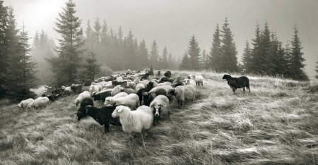 spirit of antiquity with sheep in the mountains