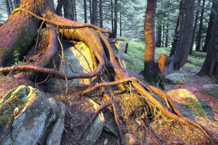 The mysterious wild forest