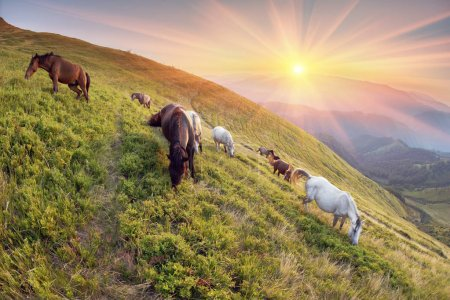 Horses in the Sunny mountains