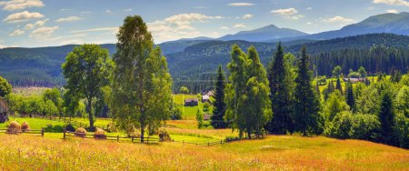 Flower farm in Carpathian Mountains