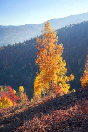 Autumn in Pokutsko-Bukovina, Carpathians