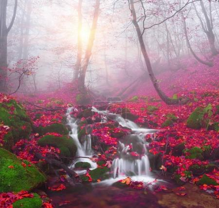 Stream in the mountain forest