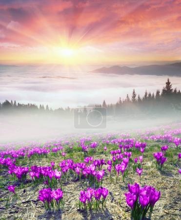 Foggy sunrise in the Carpathian mountains