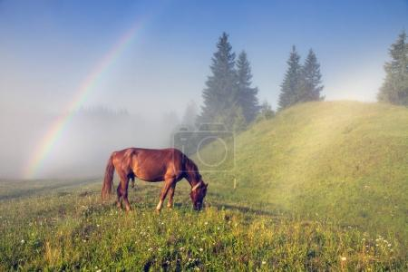 A horse grazes in the fog in the Carpathians