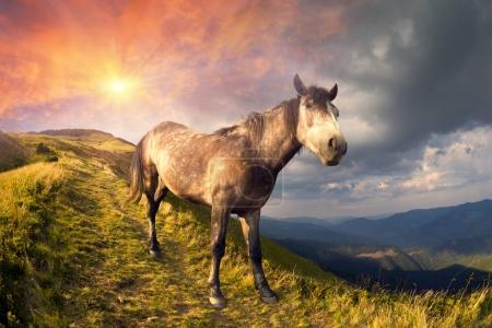 Horse on the mountain top