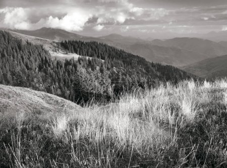 autumn Carpathians in black and white tone