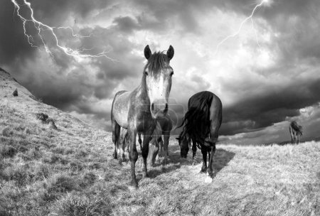 horses in the storm in mountains