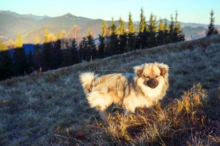 The dog in the sunny mountains