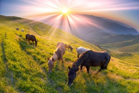 Horses on the mountain top