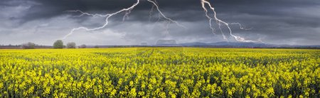 Thunderstorm over rapeseed field