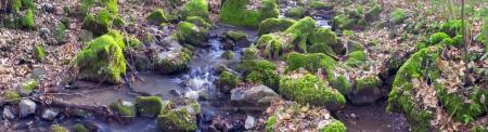 Green moss in creek