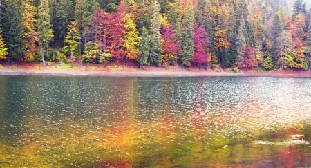 Synevir lake in autumn colors