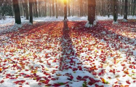 Meadow with fallen leaves