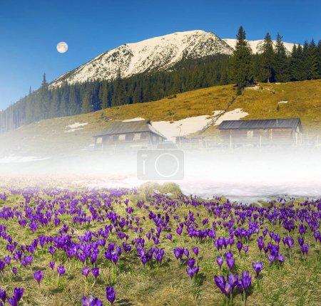 Flower farm in Carpathian Mountains