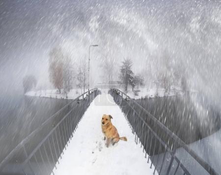 dog on the bridge in Ivano-Frankovsk