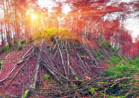 Deadfall at the Ukrainian Carpathians