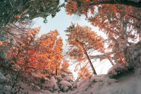 Frosty forest in mountains