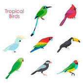 Vector illustration of tropical birds icon